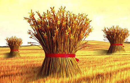 新西兰农业商学专业