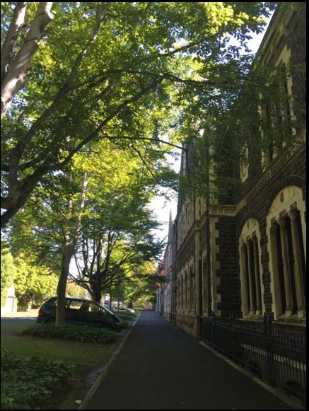 奥塔哥大学