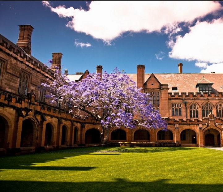澳洲 悉尼大学 图片2