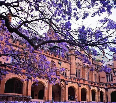 澳洲 悉尼大学 图片24