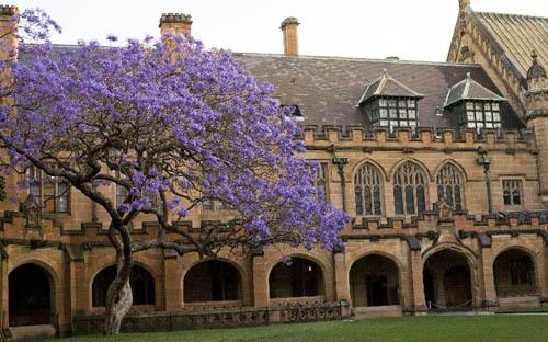 悉尼大学排名