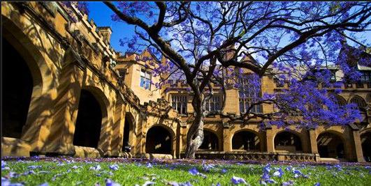 澳洲 悉尼大学 图片23