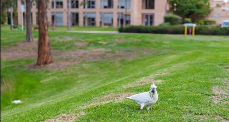 西悉尼大学心理学专业基本信息